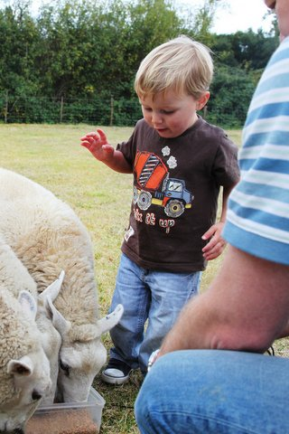 Family fun! - feeding the sheep