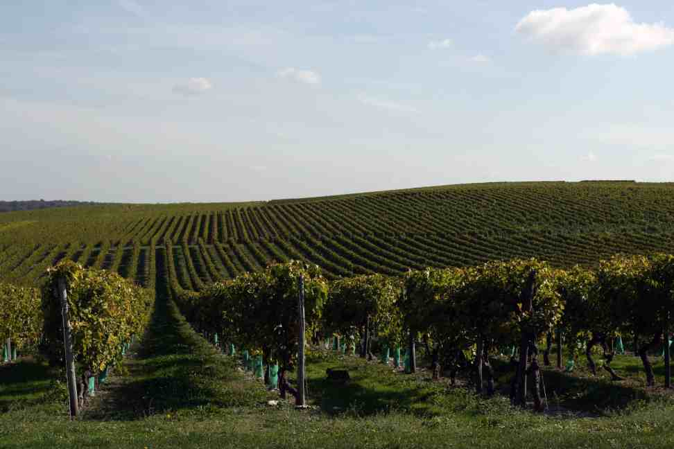 Charente Gites, Cognac vineyards